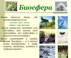 Экологическая пирамида Что такое Биосфера