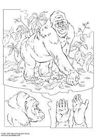 Kleurplaat Gorilla Afb 3060 Images