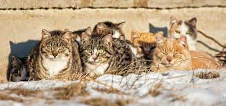 Image result for feral cat pictures