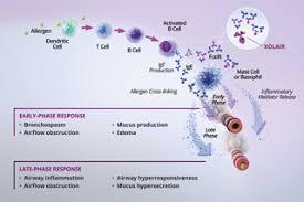 Xolair Dosing Chart Asthma Dosing For Allergic Asthma And Ciu Xolair Omalizumab