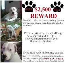 Lost Pet Flyer Maker Magnificent Missing Dog Flyers Erkaljonathandedecker