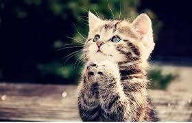 Jak Snížit Kočičí Drápy Nůžkami Z Jakých částí Se Skládá Psí Dráp