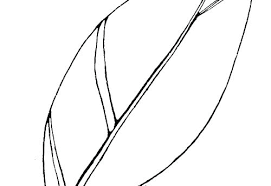 turkey feathers coloring pages. Unique Turkey Coloring Page Of Turkey Feather Outline For Printable Pages Template Free F Inside Turkey Feathers Coloring Pages E