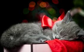Holidays christmas bow red animals cats kittens whiskers sleep ...