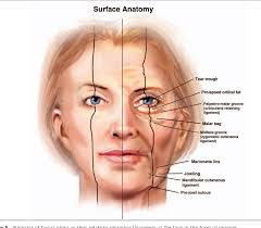 face anatomy retaining ligaments of the face review of anatomy and clinical