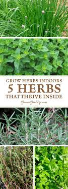 Kitchen Herb Garden Indoor 17 Best Ideas About Apartment Herb Gardens On Pinterest