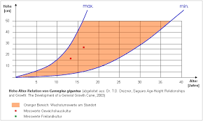Growth Rate Of Saguaros Grown From Seed Cactiguide Com