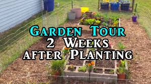 gardening beginners vlog raised bed square foot and container gardens you