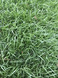 Help Identifying Grass Type Lawnsite