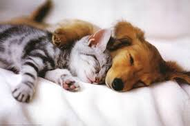 puppy and kitten. Interesting Puppy Cuddles Sleeping Puppy And Kitten Art Poster Print Inside And Kitten AllPosterscom