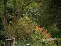 Small Picture How To Design your garden Using Native Plants