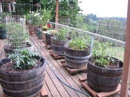container gardening homely ideas patio vegetable garden best container gardening on garden pots ideas