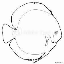 Simphisodon Discus Pesce Di Acquario Disegno Bianco E Nero Kaufen