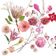 types of flowers in bouquets. our favorite flowers from the ballerina pink to hot fuchsia spectrum. types of in bouquets
