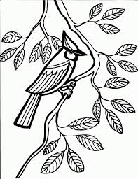 Small Picture Cardinal Bird Coloring Page Northern Cardinal Coloring Pages
