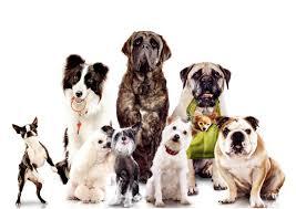 dog wallpapers dog desktop images hd dog images dog wallpapers free images dogs dog claws puppies 1200 850 wallpaper hd