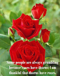 Beautiful Red Rose Quotes Best Of Beautiful Pictures Of Roses With Quotes My Web Value