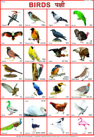 Hindi Birds Name Chart Amazon In Buy Bird Chart 50 X 70 Cm Book Online At Low