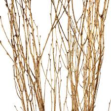 Birch Branches - Goldleaf