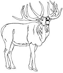Small Picture North American Elk Coloring Pages Download Print Online