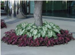 Pictures Of Flowers Great Container Garden RecipesContainer Garden Ideas Photos
