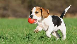 Image result for training a puppy
