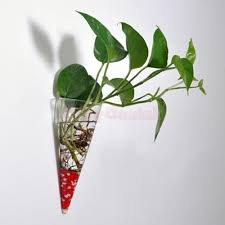 decorative wall sconces for plants best of clear circular cone glass wall hanging vase bottle for