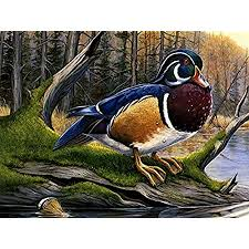 Blue white duck wall hanging ceramic plaque country wood frame handpainted trive. Amazon Com Colorful Wood Duck F1 Oil Painting On Canvas Modern Wall Art Pictures For Home Decoration Wooden Framed 12x16 Inch Framed Posters Prints