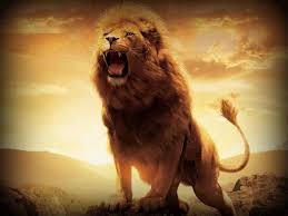HD Lion Wallpapers 1080p - Wallpaper Cave
