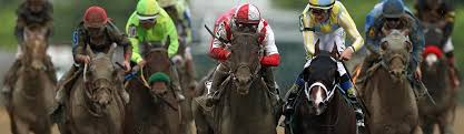 Preakness Stakes Betting Guide 2019 Odds Predictions And