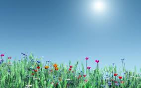 Spring Flower Wallpaper Backgrounds ...