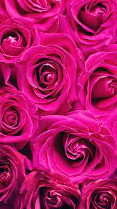 Pink Rose Wallpaper (37+)