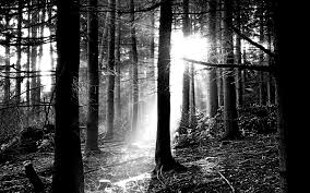 black and white nature wallpaper. Fine Nature Free Black And White Forest Picture Inside And Nature Wallpaper D