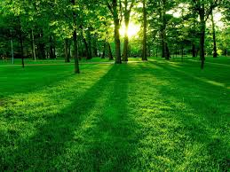 Green Nature Wallpapers - Top Free ...