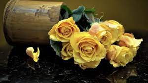 Hd Images Of Yellow Roses - 1920x1080 ...