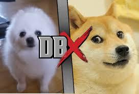 doge dog. Wonderful Dog Doge VS Gabe The Dog Is A WhatIfDBX GTDVSD With T