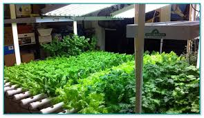 indoor hydroponic vegetable garden. Indoor Hydroponic Vegetable Garden L