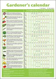 A3 Novice Allotment Planner Gardeners Beginners Vegetable Growing Gardening Calendar Poster Folded To A4 Ideal Small Gift For Mothers Day