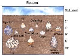 Planting Bulbs Howstuffworks