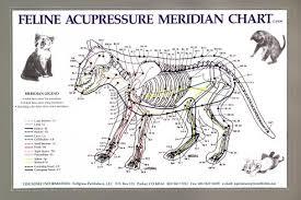 Canine Acupuncture Meridian Chart 60 Abundant Acupressure Meridian Chart