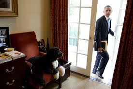 bo was just hanging out in the outer oval office barack obama enters oval