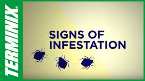 Protect Home From Bed Bugs - How To Get Rid Of Bed Bugs - Terminix ...