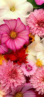 Flowers background, many kinds, pink ...
