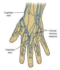 Vein Chart For Shooting Up Injecting In The Hands Black Poppys Junk Mail