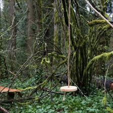 Tree Swing Wood Rope Tree Swing Schoolhouse Electric