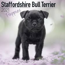 Staffordshire Bull Terrier Puppies Wall ...