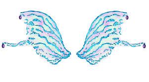 Winx club bloomix battle : Aisha Bloomix Wings Wings Graphic Design Art Winx Club