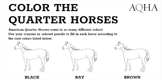 This one is perfect for younger children, with letters spelling out horse underneath the picture. Color The Quarter Horses Free Downloadable Coloring Pages Aqha