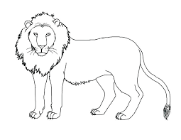 mountain lion coloring page pages color baby