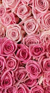 Pink Wallpapers For Iphone Xr - Novocom.top